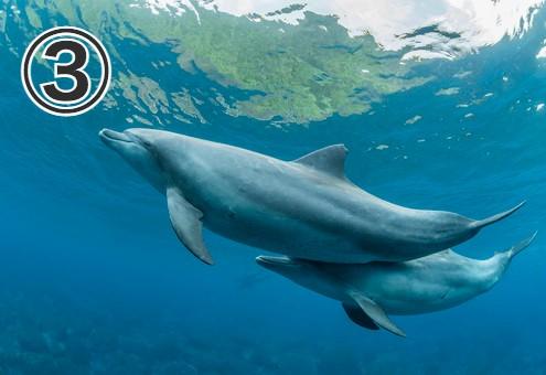 海中を親子で泳ぐイルカ