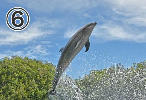 自然豊かな海でジャンプをしているイルカ