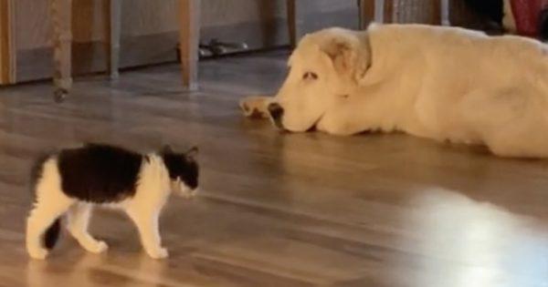 ち、小さいのキタ♡ 子猫の接近にテンションぶち上がるワンコにほっこり