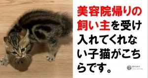 【関係性ムズすぎ】ネコの「謎行動」が逆に超キュートなんですよ… 7選