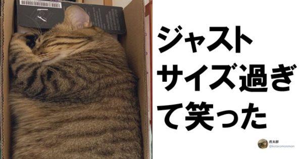 専用スペースちゃうぞ。「猫との暮らし」ってツッコミどころ多すぎません? 6選