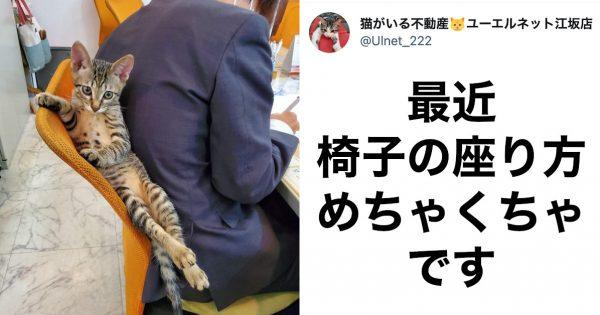 自由過ぎる「猫の社員さん」にTwitterで反響!会社の人に《勤務態度》を聞いてみました
