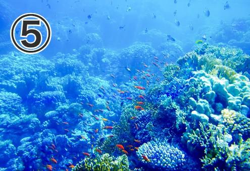 海中のサンゴ礁の写真