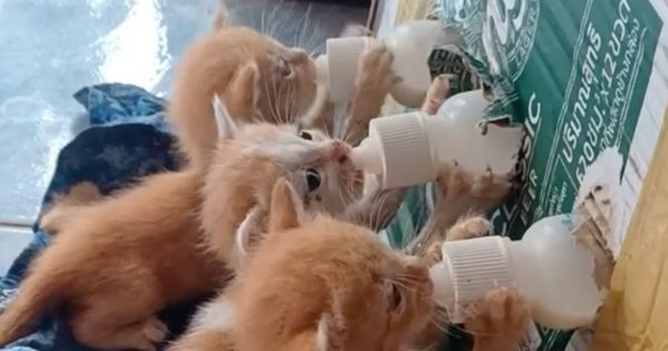 母を亡くした4匹の子猫に、ミルクをあげる「画期的な方法」 投稿に応援メッセージも