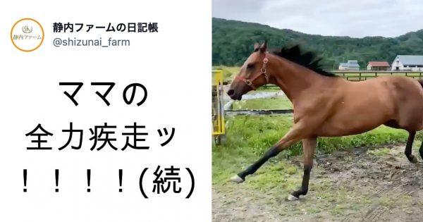 母馬は父にディープインパクトを持つサラブレッド!Twitterで話題の「親子放牧シーン」を取材