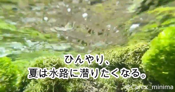 【90万再生】涼しくなる「水中お散歩動画」が話題!「水草が好き」投稿者語る奥深さ