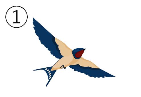 真っ直ぐ飛ぶツバメの下アングル