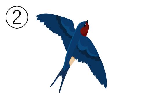 羽をまっすぐ広げて飛ぶツバメ