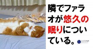【王者の風格】猫さまの本日のご様子です、ご査収ください 7選