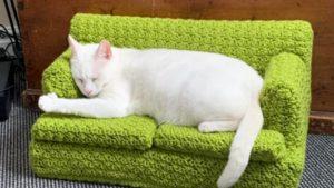 ベッドルームから玉座まで…。海外民の「猫への貢ぎ物」が色々スゴイw 8連発