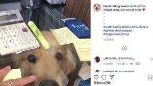 犬を飼う人が「机を透明にすべき理由」に反響 !「完璧なデスク」「仕事が捗りそう」