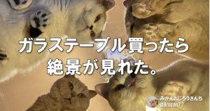 もっとくれぇ!「ウチの猫じまん」ほど尊いものってないよね 7選