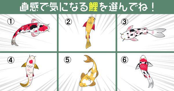 【心理テスト】選んだ錦鯉で、あなたの「性格タイプ」がわかります!
