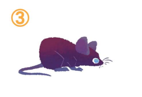 伏せた体勢の、赤紫と紫のグラデーションのネズミ