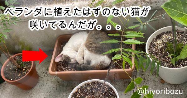 《猫、ベランダに生える説》の決定的証拠にネット民爆笑「うちにも生えてますww」