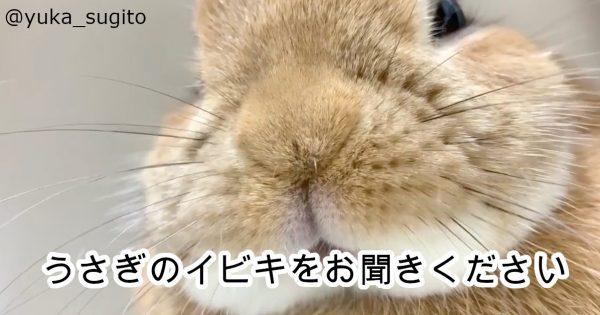 「可愛い」「キュンキュンした」寝ているウサギに注目すると、驚きの新事実が…
