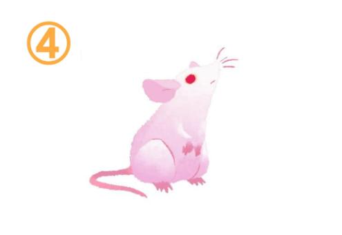 座りながらクンクンする、ピンクと白のグラデーションなネズミ