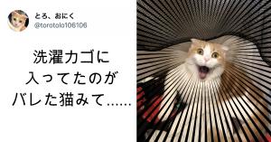 【21万いいね 】洗濯カゴで見つかった猫の「驚きすぎ」な表情に「腹筋崩壊」「素材にしたい」