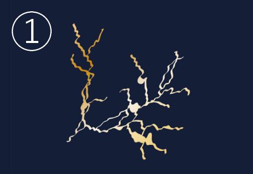 木の枝のような金継ぎ