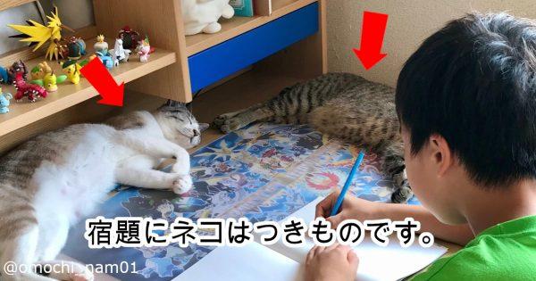【机の上が猫だらけ】「理想的な宿題環境」ってまさにコレでしょ…