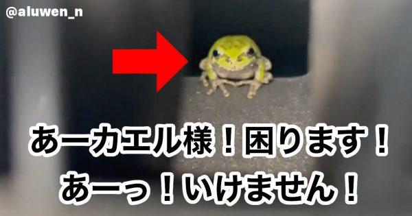 お、ここ涼しいやんけ!「車のエアコン内」への移住を決意したカエルくんに反響