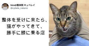 【Twitterで話題】7匹の猫スタッフが出迎える整体院。きっかけは「お客さんの要望で」