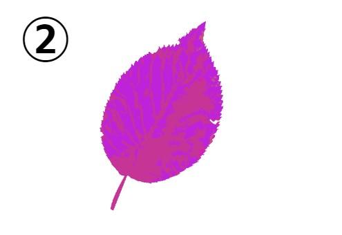 紫とピンクの葉っぱ