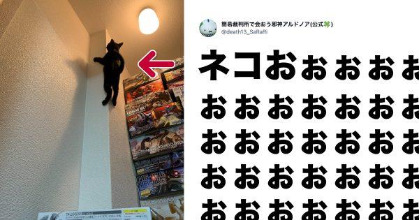 オリンピック選手も「本気のネコの身体能力」には勝てないとわかる画像 10選