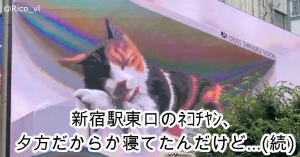 新宿にでっかい猫!クロス新宿ビルで放映中の「3D癒し動画」が話題