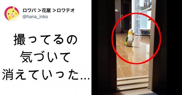 撮影NGですよ!8万再生の動画「カメラから爆速で逃げるインコ」の中毒性ヤバない??