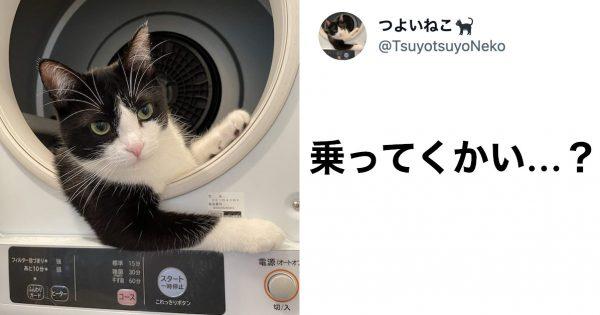 「かっこよすぎ」Twitterで15万いいねのイケメン猫!クールな仕草に釘付け…