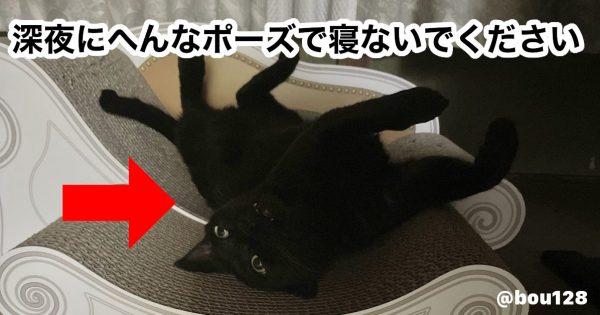 【※黒猫です】夜中に飼い主が飛び起きた、ヤバい寝相に反響「ホラー漫画で見た」「足が5本…」