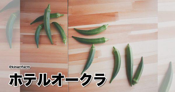 オクラだけにね…。芸術点120点の「アートな野菜」がジワジワくる 8選