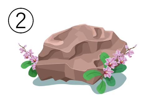 花が周りに咲いた、ペールブラウンの岩
