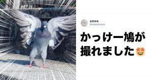鳥を見てたら「奇跡」が撮れた。10選