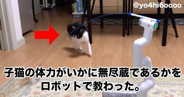 子猫の体力ヤバ…。1時間ぶっ通しで頑張る「自動ねこじゃらしロボ」が話題