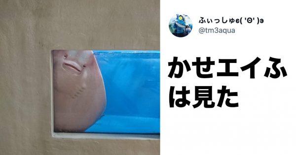 「家政婦は見た!っぽいエイ」撮影の飼育員さんに聞いた《激カワ・水族館の生き物》Best3