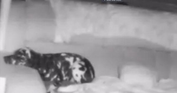 犬って独りのとき何してるの?隠しカメラが捉えた「飼い主への愛情」にキュン♡