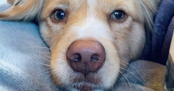 職場ストレスは「犬のアゴのせ」で解決する 5連発
