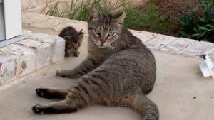 ※超デレてますが「野良猫」です 5連発