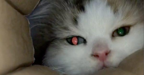 たまらんニャ…。「家の中のアレ」に完敗した猫たち 5連発