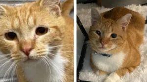 顔つきが全然ちがうw 幸せいっぱい「保護猫ビフォーアフター」に胸アツ 3選