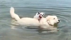 犬たちの友情のアツさ…知ってる?最強「ワンコンビ」 5選