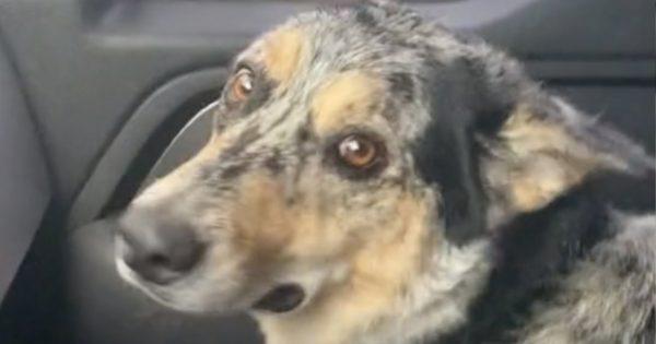 【TikTok動画】可愛すぎだろ!「捨てられる」と勘違いした犬の反応…