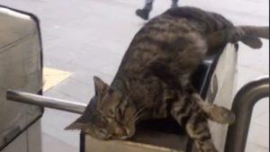 出勤前に猫タッチ!トルコの「触り心地が最高な改札」にいいね殺到♥