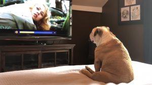 あなたの暮らしに足りないのは「テレビに夢中な犬」かもしれん 5選