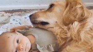 だって可愛いんだもん!赤ちゃんが好きすぎる犬にほっこり 5選