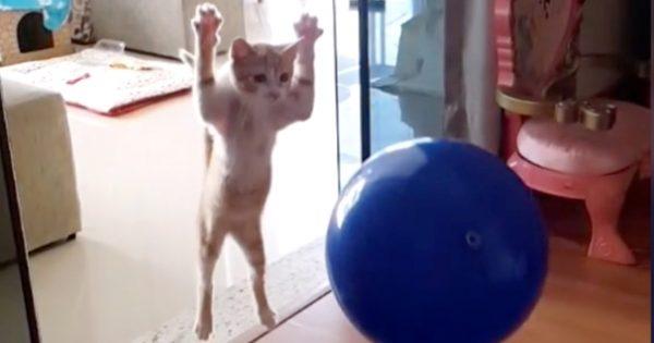 猫飼いさん、お宅の猫もこんなに跳びます…? 5選