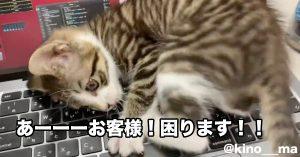 PCの上でぐるんぐるん。いたずら子猫の《全力の作業妨害》にTwitter民も悶絶
