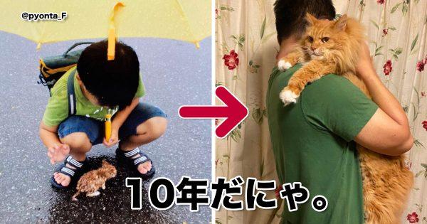 この世で一番泣けるものって「猫の成長物語」じゃね? 8選